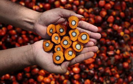 indonesia palm oil production